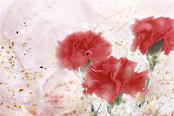 母亲节花束康乃馨花语是什么 母亲节礼物