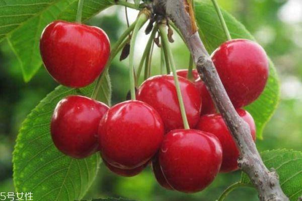 孕妇能吃樱桃吗 孕妇吃樱桃的4大好处