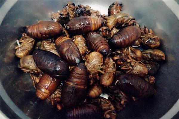 小孩可以吃蚕蛹吗 尽量少吃一些