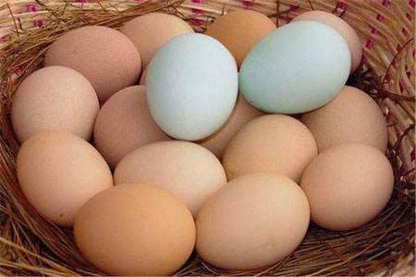 土鸡蛋多少钱一个 土鸡蛋的作用