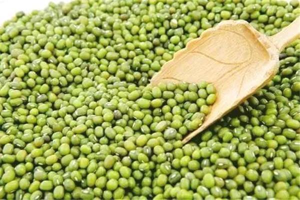 绿豆长虫了怎么处理 这样处理比较好