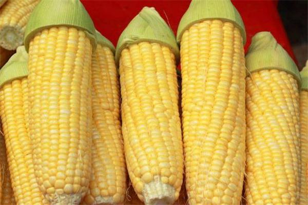糖尿病可以吃甜玉米吗 糖尿病吃甜玉米有影响吗