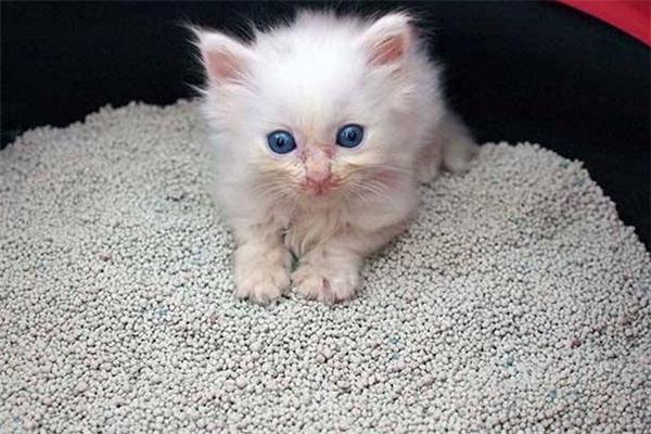 用过的猫砂属于什么垃圾 猫砂怎么垃圾分类