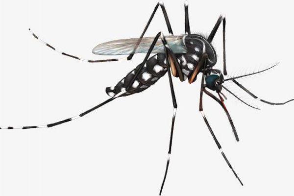 被蚊子咬后为什么会痒 夏季驱蚊小妙方