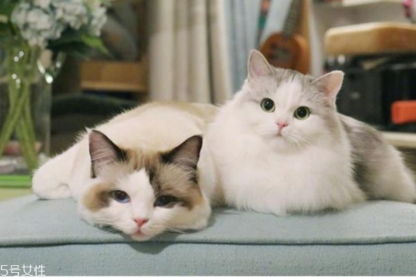 驱蚊产品对猫有害吗 家里有猫怎么驱蚊