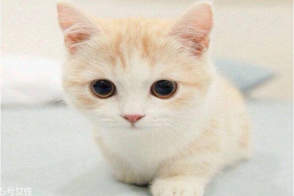 蚊香致猫中毒怎么办 怎么驱蚊对猫无害
