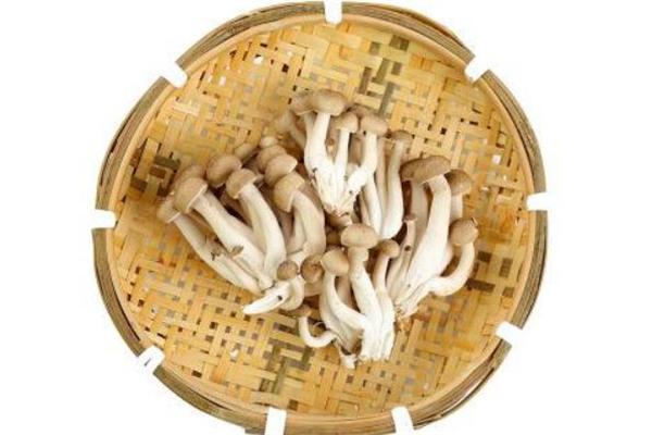产妇可以吃蟹味菇吗 产妇吃蟹味菇的好处