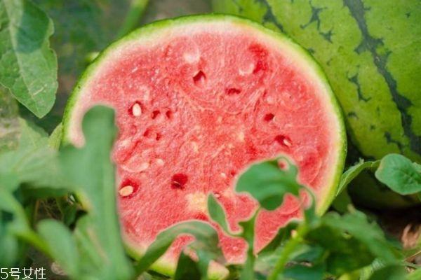 西瓜空心能吃吗 西瓜空心是不是有激素