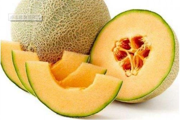 常吃哈密瓜会变胖吗 哈密瓜的含糖量高吗