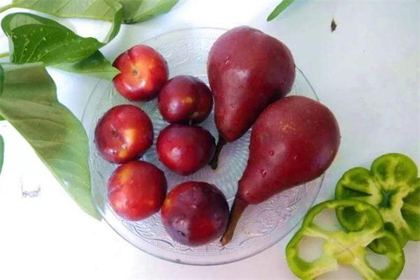 红啤梨放软了才能吃吗 红啤梨放几天会变软吗