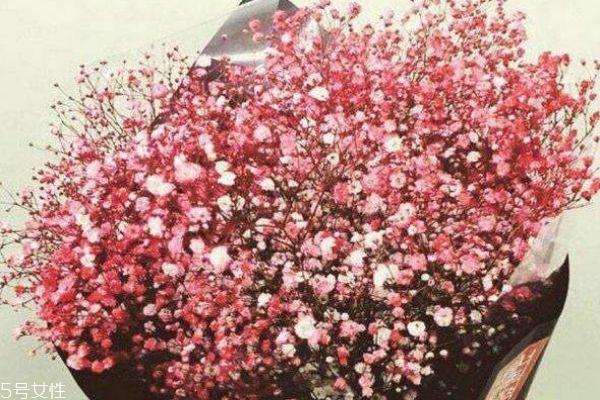 圣心百合的花语图片