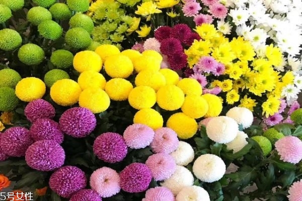 菊花有什么种类 菊花有什么功效呢