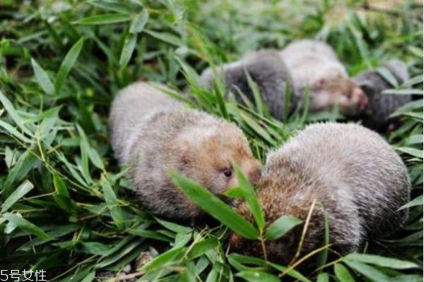 什么是竹鼠呢 竹鼠和老鼠有什么区别吗