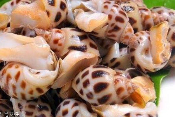 海螺生活在哪里呢 海螺有什么营养价值吗
