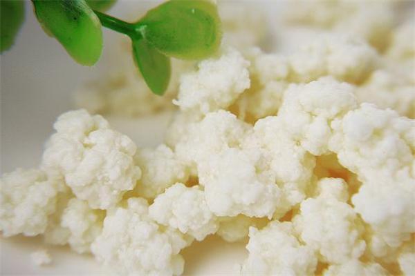 雪莲菌泡牛奶有什么功效 雪莲菌泡牛奶的做法