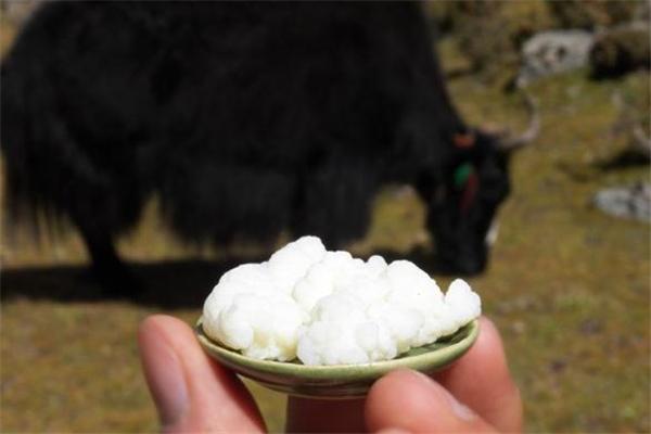 雪莲菌什么人不适合吃 经期可以吃雪莲菌吗