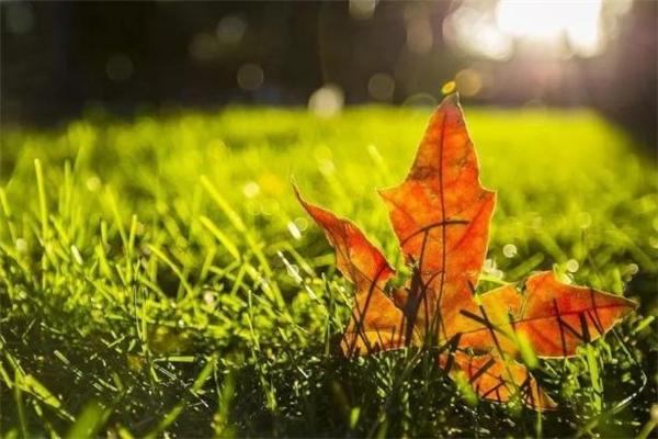 立秋无雨是空秋有什么说法 立秋不下雨真的影响收成吗