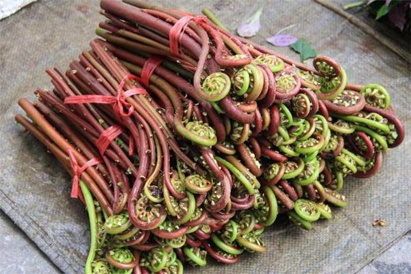 有毛的蕨菜能吃吗 蕨菜头能吃吗