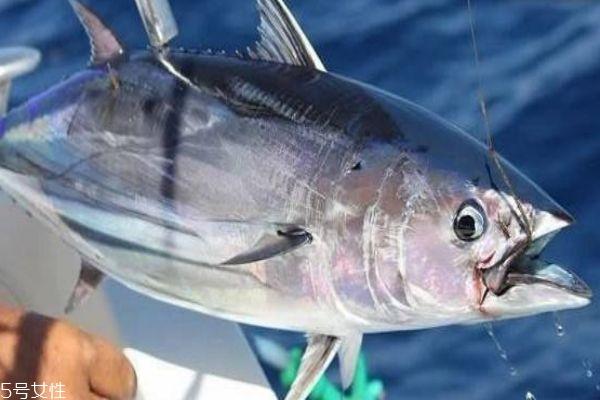 金枪鱼怎么做好吃呢 金枪鱼有什么营养价值呢