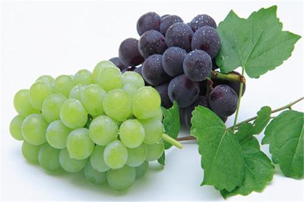 减脂可以吃葡萄吗 葡萄可以帮助减肥吗