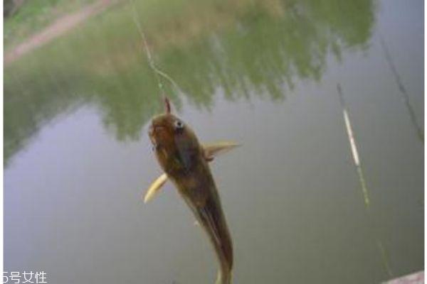 一般钓鱼用什么鱼饵呢 鱼饵怎么自己做呢