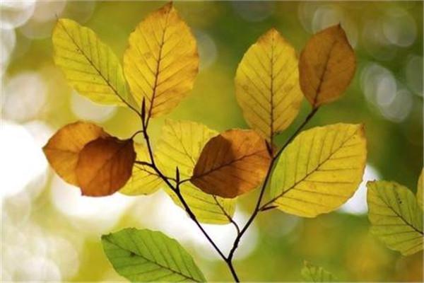 立秋以后吃什么 立秋应该怎么吃