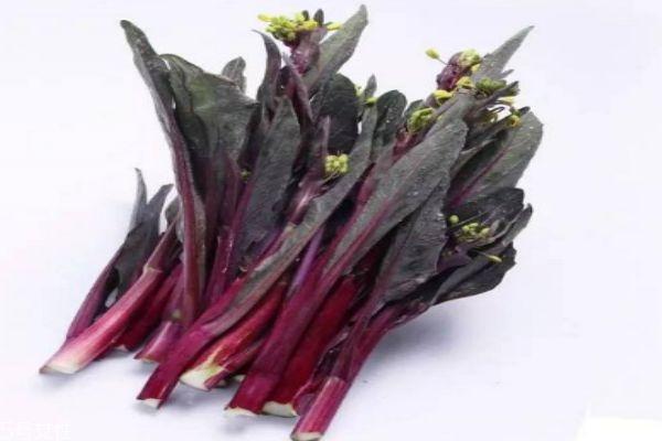 什么是红菜苔呢 红菜苔有什么营养价值呢