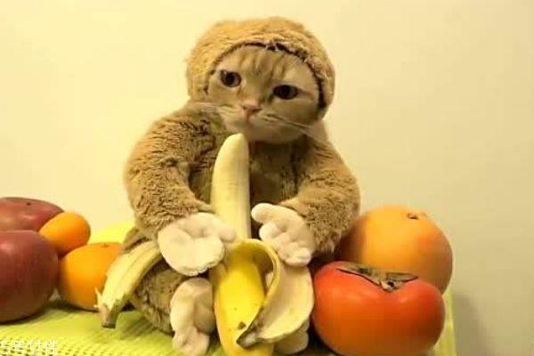 孕妇可以吃香蕉吗 香蕉的热量有多高呢