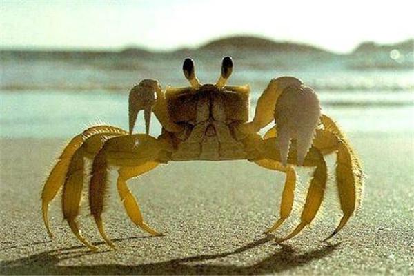 螃蟹吃起来苦怎么回事 吃螃蟹注意事项