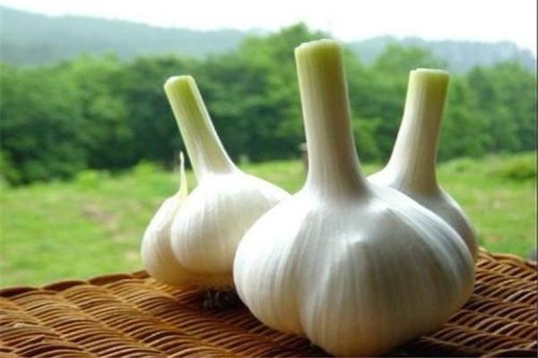 生吃大蒜对肾有什么好处 生吃大蒜不宜过量