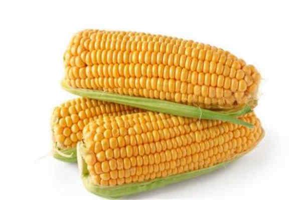 煮玉米放糖还是放盐 煮玉米要注意什么