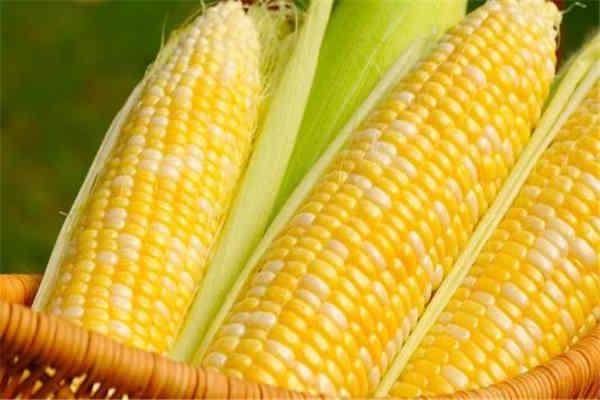 玉米是碱性还是酸性 玉米的功效