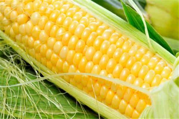 玉米有淀粉吗 玉米有什么作用