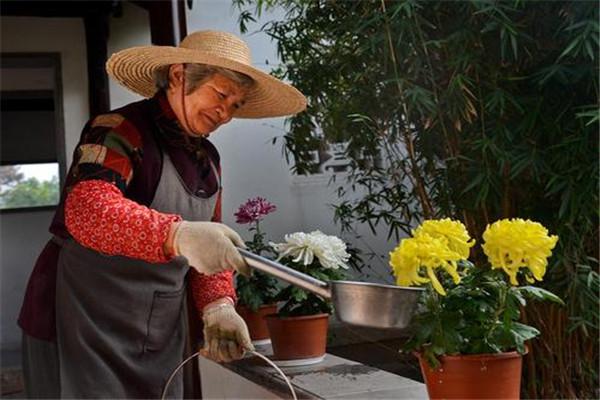 烟灰水可以浇花吗 烟灰水可以浇花去虫