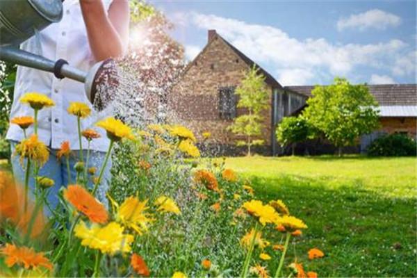淘米水浇花图片