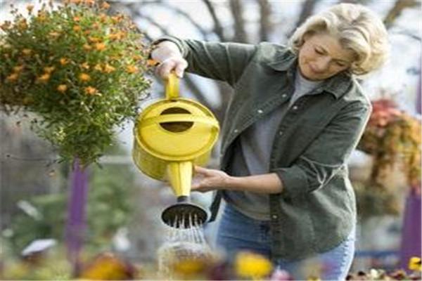 浇花是浇叶子还是根 浇花怎么浇
