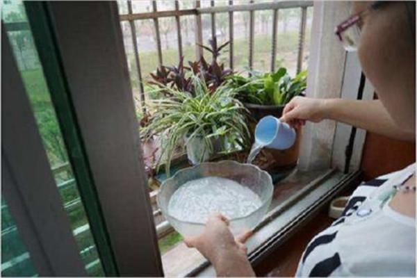 浇花可以用凉开水吗 浇花用什么水好