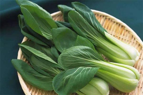 上海青是什么菜 上海青是小白菜吗