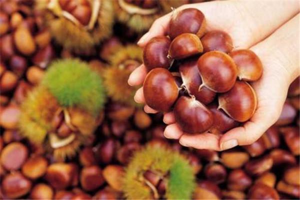 板栗是水果吗 板栗有什么功效