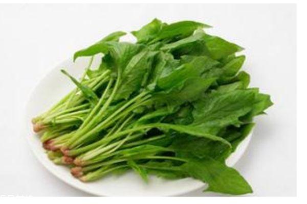 几月份可以吃到菠菜呢 孕妇可以吃菠菜吗