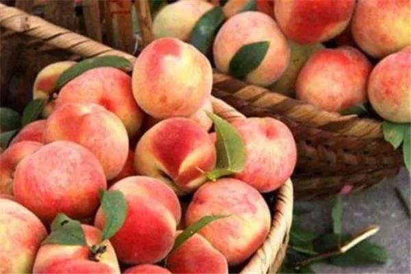 桃子需要放冰箱吗 桃子怎么储存