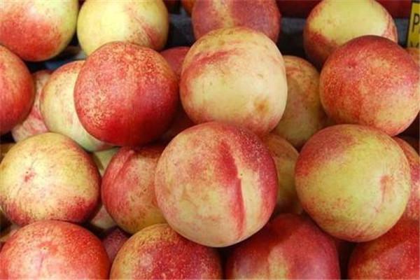 桃子的核能种吗 桃子的核怎么种