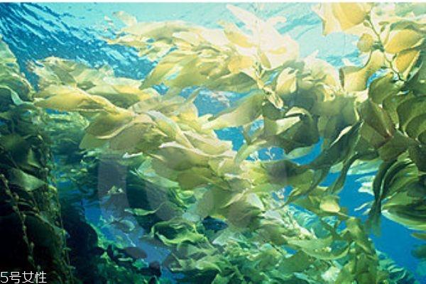 海带是发物吗 什么人群不能吃海带呢
