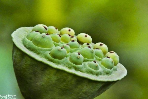 什么是莲蓬呢 莲蓬有什么营养价值呢
