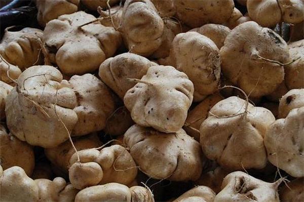 凉薯减肥期间可以吃吗 减肥的人能吃凉薯吗