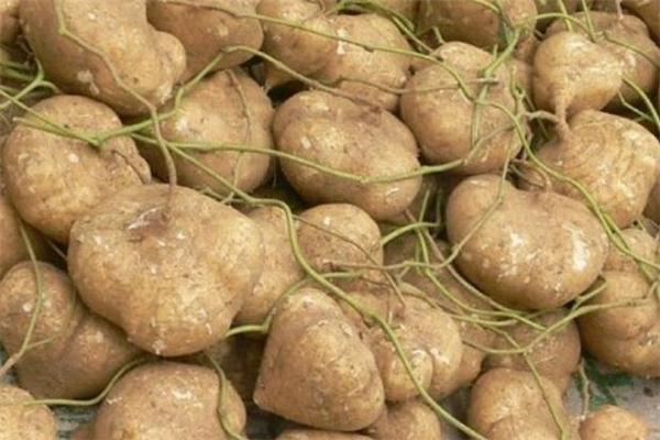 凉薯有毒吗 凉薯里的黑斑是什么
