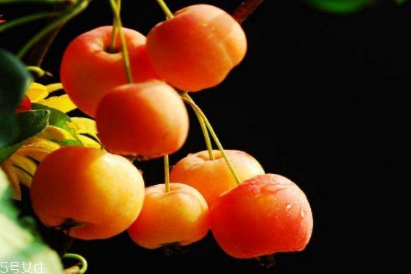 海棠果多少钱一斤呢 海棠果有什么食用禁忌呢