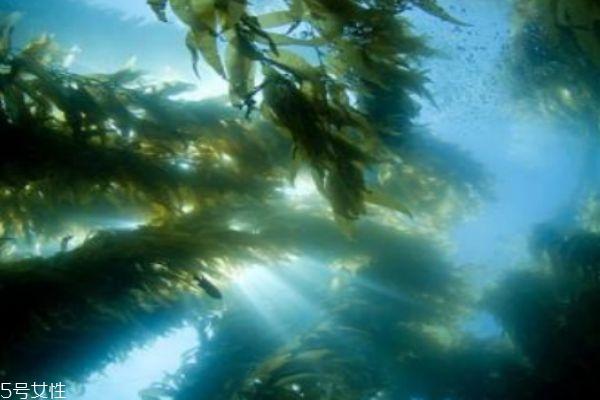 什么是海藻呢 海藻主要分布在哪里呢