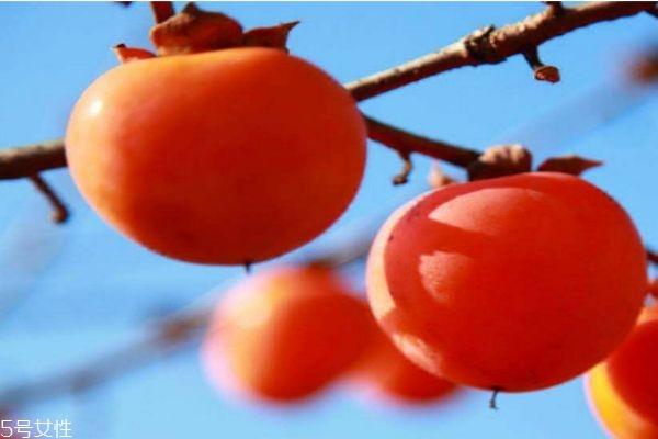 柿子的热量高吗 柿子的热量有多少呢