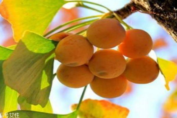 什么是银杏呢 银杏有什么营养价值呢